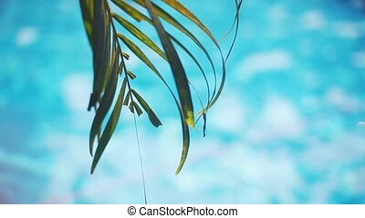 Palm tree leaves and pool water during calm sunny day. -...