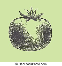 Hand drawn tomato. Organic eco food with scketch style. -...