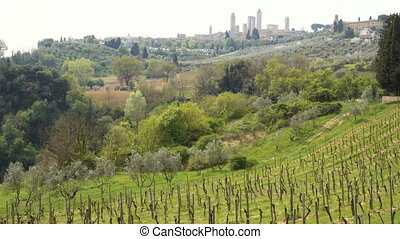vineyards of Toscana - view of a villa on a hill, a cypress...