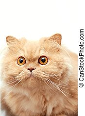 Isolated cat with white background