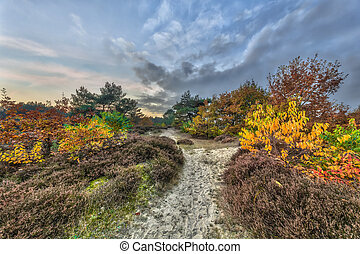 Autumnal heathland trail - Trail rhrough Autumnal heathland...