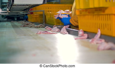 Workers gloved hands choose chicken wings for packaging at...