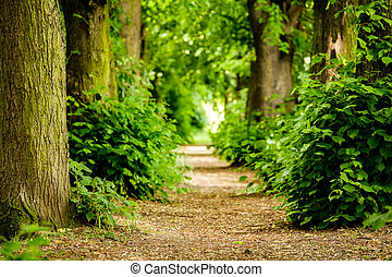 Footpath between trees in the forest near Koblenz, Germany.