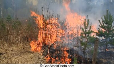 Wildfire 2. - During a drought, forest fire in the suburbs....