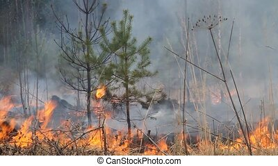 Wildfire 3 - During a drought, forest fire in the suburbs...