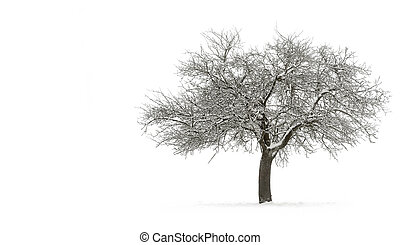 Snow-covered single tree with copyspace - Snow-covered...
