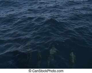Four dolphins - Dolphins swiming in the sea