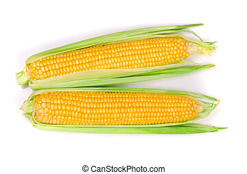 ear of corn isolated on a white background. Top view.