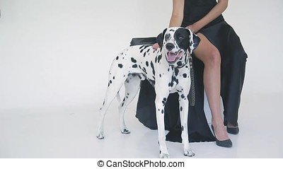 beautiful attractive girl in a black dress with a Dalmatian dog posing for a photographer in the studio