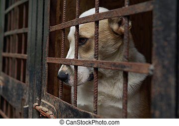 Dog in the animal shelter - Dog in the shelter for homeless...