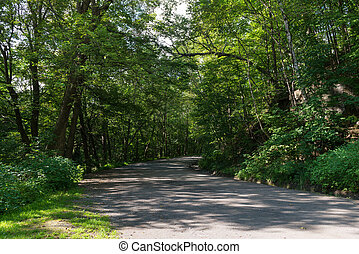 Tree lined road on Mount Royal, Montreal, Quebec, Canada