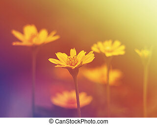 Close up small yellow flower blooming with soft style and...