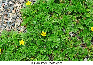 Small field flowers in greenery