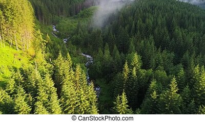 flight over forest in mountains - flight over green forest...