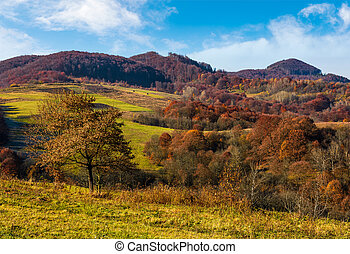 tree on hillside in late autumn countryside. forest with red...