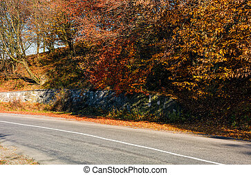 road through the forest with red foliage. beautiful autumn...
