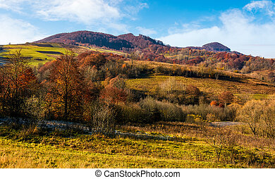 late autumn countryside landscape. forest with red foliage...