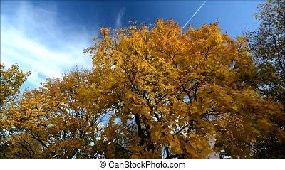 Golden October in Berlin Spandau, Germany - Autumnal...