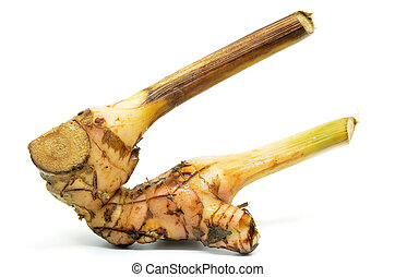 Fresh galangal root isolated on white background