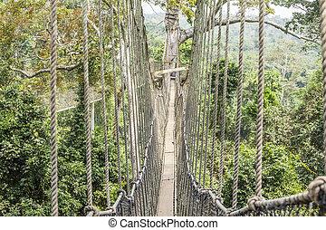 Canopy walkways in tropical rainforest, Kakum National Park,...