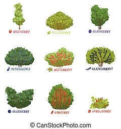 Different garden berry shrubs sorts with names set, fruit...