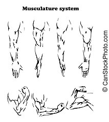 Muscular system of the hand in flat design