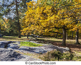 Autumn Scene in Fontainebleau Forest - Beautiful fall...