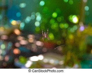 kind araneomorph spiders - Spider garden-spider (lat....
