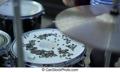 Drummer beats the snare drum with sunflower seeds, seeds...