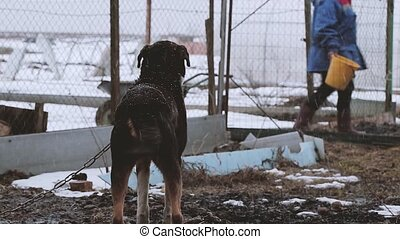 Dog on the chain in winter