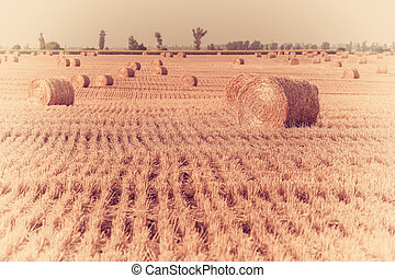 Landscape with boundless - Agricultural landscape with...