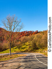 trees by the road in late autumn at sunrise - trees by the...