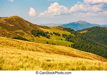 hills with forest and high peak in a distance - grassy hills...