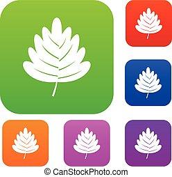 Hawthorn leaf set color collection - Hawthorn leaf set icon...