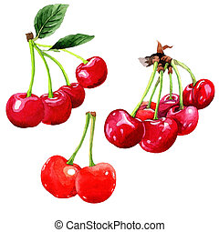Cherry wild fruit in a watercolor style isolated. - Cherry...