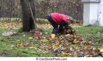 woman gather dry maple leaves in fabric bag autumn. Zoom...