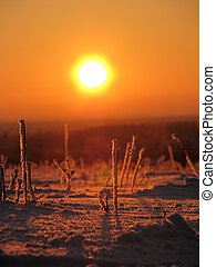 Snow on sunset background - Snow and silhouette of the herb...