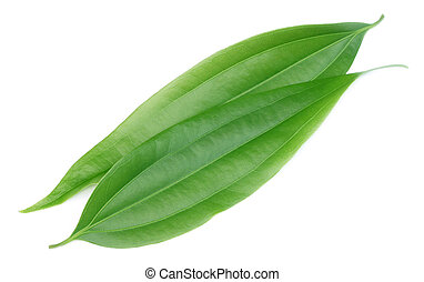 Green cassia leaves or Tej Patta of Indian subcontitinent