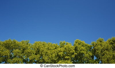 Tree Leaves Rustle in the Wind Against a Blue Sky