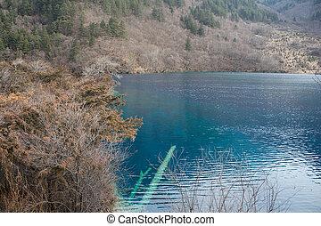 Forest by the lake Jiuzhaigou