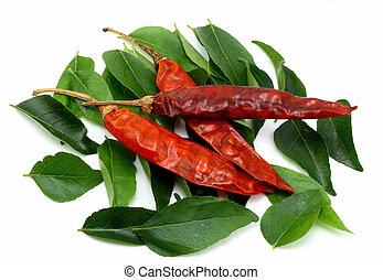 caril, folhas, secos, vermelho, chilies