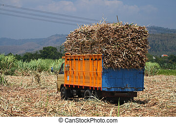 sugarcane transportation - Truckers transporting truck loads...
