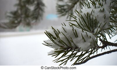 fir needles and defocused cars on a snowed road