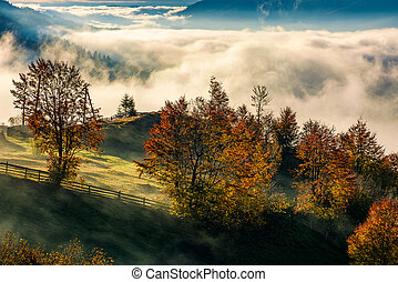 gorgeous countryside with rising fog in valley - orchard...