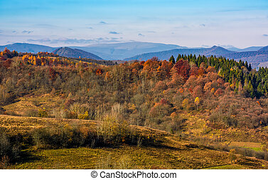 forest on a hill in front of a mountain ridge in autumn....