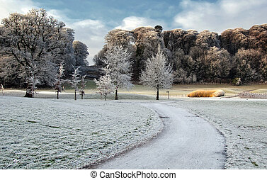winter scenic nature capture of forest walk in ireland -...