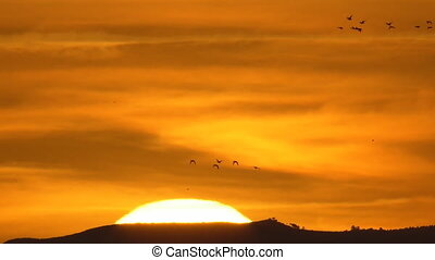 Amazing, beautiful fast sunset with duck birds flying