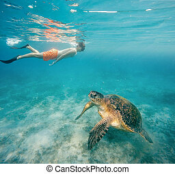 Young boy Snorkel swim with green sea turtle, Egypt - Young...