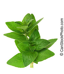Oregano - Green herbs isolated against white background....