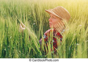 Female farmer examining wheat ears in field, woman working...